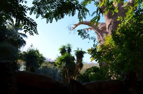 fuegirola-biopark-041